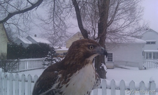 Hawk_01-13-2011 053