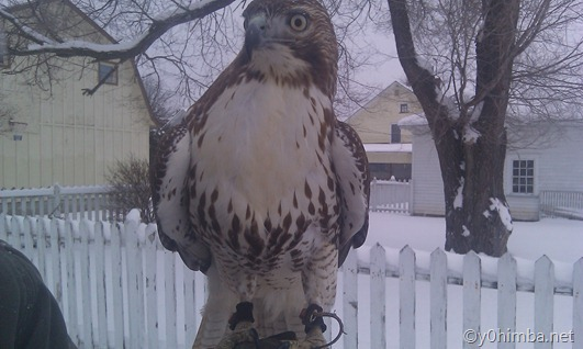 Hawk_01-13-2011 054