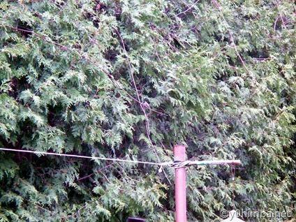 Hummingbird 05-02-2011 001