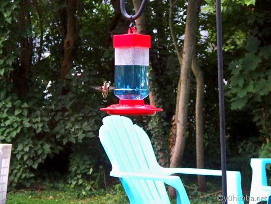 Hummingbird 08-10-2010